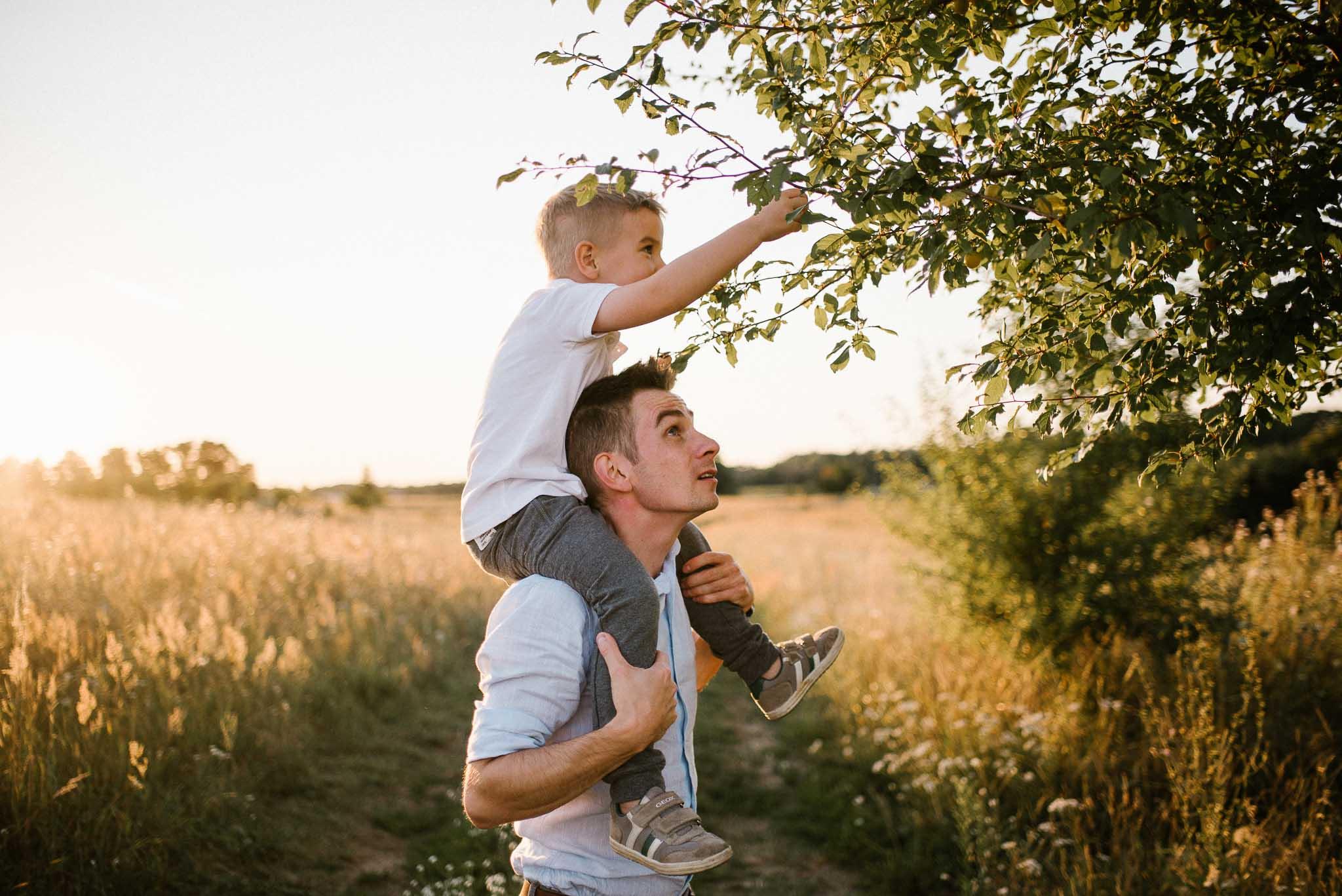 Tata trzyma syna na barana i zrywają mirabelki - sesja rodzinna w plenerze na łące w Poznaniu